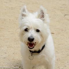 Reva (pacgrove) Tags: dog