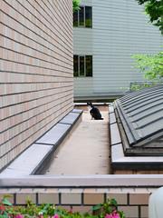 concrete jungle cat (peaceblaster9) Tags: street building shinjuku tokyo cat 新宿 東京 猫 ネコ lumixgx7mk3 12mm60mm leicadg