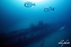 Special scenery, that´s our wreck.... (chk.photo) Tags: fish ocean fisch outdoor tauchen animal underwater water dive light diving scuba wrack schiff uboot frankreich france ship wreck submarineboat flickrtravellaward flickr meer
