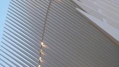 A17780 / calatrava's oculus (janeland) Tags: newyorkcity newyork 10007 lowermanhattan financialdistrict oculus wtctransportationhub architecture sooc may 2018 architecturaldetail santiagocalatrava architect lateintheday abstract