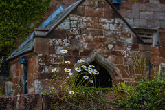 Floral congregation (tonguedevil) Tags: outdoor outside countryside spring nature church daisies flowers building applebyinwestmorland wall colour light shadows fuji