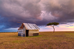 The Ugly Hut (Xenedis) Tags: acacia acaciatree africa afrika clouds eastafrica gamedrive goldenhour grass hut kenya landscape maasaimara maranorthconservancy narokcounty plains republicofkenya riftvalley safari savannah shed sky tree ig