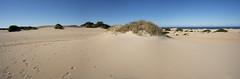 Coastal Dunes WA