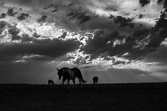 A horse, the sky & the sunrays (Black&Light Streetphotographie) Tags: mono monochrome lichtundschatten landscape landschaft nature natur urban himmel sky tiefenschärfe fullframe vollformat dof depthoffield blackandwhite bw blackwhite bokeh bokehlicious blur blurring horses pferde tiere animals sony sonya7rii availablelight