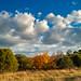#164/365 Last Leaves of Autumn