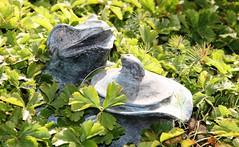 Krötentopf (hussi48) Tags: frosch toad kröte topf natur grün green
