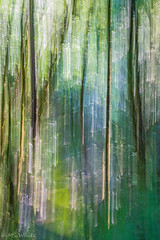 Beauty in Blur Pic #1 (Picture-Perfect Pixels) Tags: flickrexplorejune132019 forest trees blur blurred intentionalcameramovement abstract woodland nature artistic fujifilmxt2 vancouverisland gowllandtodprovincialpark todcreek britishcolumbia canada park outdoors colourful