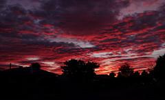 Winter sunrise.... (flying-leap) Tags: newzealand sunrise nature cloudsstormssunsetssunrises clouds sky winter dawn sonydscrx10m4 sonydscrx10iv sonyrx10iv fiery layers
