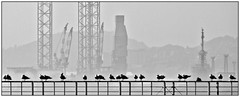 Looking west! (john.methven) Tags: harbour rigs oil dundee droughty ferry industry birds mono blackandwhite