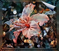 Hi Biscus (PaulO Classic. ©) Tags: hibiscus ddg deepdream googledeepdream textures picmonkey canon eos450d photoshop