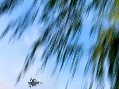 摇拽 (Dr. Ernst Strasser) Tags: ifttt 500px ernst strasser unternehmen startups entrepreneurs unternehmertum strategie investment shareholding mergers acquisitions transaktionen fusionen unternehmenskäufe fremdfinanzierte übernahmen outsourcing unternehmenskooperationen unternehmensberater corporate finance strategic management betriebsübergabe betriebsnachfolge