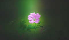 Herb Robert (Dhina A) Tags: sony a7rii ilce7rm2 a7r2 a7r bokeh bokehlicious soft creamy manualfocus eltan elite optics 90mm f22 eltaneliteoptics90mmf22 35mm slide projection projector lens