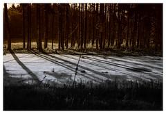 Nature Takes Over (jmvanelk) Tags: nikond80 nikkor1870mm nikfilters soesterberg airforcebase abandoned naturepark silence trees shadows backlight concrete