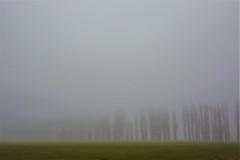 Less (ulbespaans) Tags: less fog minimalism landscape lessismore lessismoreoutdoors landscapephotography foggy foggyforest foggyweather foggyday foggymorning minimal minimalmood minimalphotography minimalist