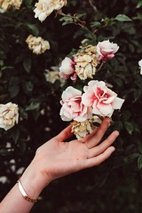chlorophyll collection (Art by 2wenty) Tags: asph 50 summilux moody mood flower floral m9p m9 leica oliviaotcasek 2wenty