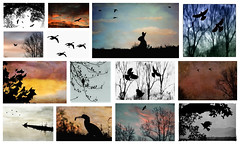 Wildlife Silhouettes (jeanne.marie.) Tags: wildlifesilhouettes nature morning colorful collage mosaic birds turtle mountains rabbit