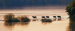 Sunset by the river (Inka56) Tags: river riverside riverisland krcedinskaada horses sunset sunsetglow sunsetlight cloudsstormssunsetssunrises crazytuesday five