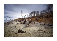 The Aftermath (Lindi m) Tags: covehithe suffolk beach erosion trees stormy coastal seashore sand eastanglia