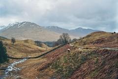 West Highland Way, April 2018 (edwardsholly) Tags: westhighlandway highlands scotland film 35mm olympustrip olympustrip35 olympus