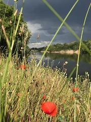 dark side and light side (claudeprime5) Tags: sunlight storm landscapes sunbeam laloire darksideandlightside poppies magic