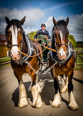 Horse drawn (Richard_Turnbull) Tags: nikond600 nikon d600 north east beamish musem plough horse carriage wagon coachman horses