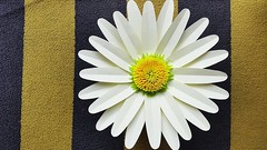 Amanda Giant Paper Flowers | Paper Flower Backdrop (ufnmimcp) Tags: youtube origami papers made colors paper