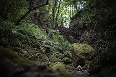 In the stone canyon (mexou) Tags: stone rocks canyon creek green luxembourg trees mexou kelsbaach zeiss milvus 50mm