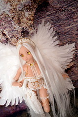 lingerie angel (toel-uru) Tags: dd doll dollfiedream angel ddh09 돌피드림 sharkdolls wig lingerie