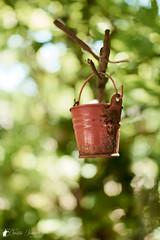 Hanging Bucket (Bright Ideas with Chan Udarbe) Tags: andoerqr60 blackrapidrssportversion2 hoodmanhoodeyeheyensgeyepiece nikond7200 nikonmbd15 peakdesignanchorlinksv4 phaseonecaptureonepro sigma30mmf14exdchsm alcala pangasinan philippines flickr fun color colors nature object street