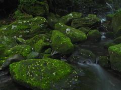 bright green, deep green (murozo) Tags: moss green water river mototaki underflow nikaho akita japan 苔 緑 水 川 元滝伏流水 にかほ 秋田 日本 rock 岩
