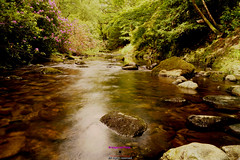 Shimna river in Tollymore forest fast flowing (Photographs and Images of Northern Ireland) Tags: tollymore forest park shimna river game thrones