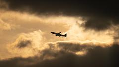 20190608 ITM JA706A (dora9092) Tags: 777200 伊丹空港 ana 全日空 千里川土手 大阪国際空港 allnipponairways rjoo itm boeing777281 osakainternationalairport itamiairport