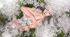Nature connection (meriluu17) Tags: belleepoque dream white flower flora natural nature her fae fairy dreamy fantasy portrait soft shine blurr sleep connect lace