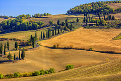 The cypress autumn in Val d'Orcia (@Jarmila) Tags: cypress way valdorcia tuscany nature hills toscana italy outdoors travel trees autumn