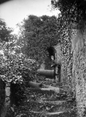 Cannon in front of them (National Library of Ireland on The Commons) Tags: fergusoconnor fergusoconnorcollection glassnegative nationallibraryofireland youghal townwalls wall flipped mirrored countycork cannon townwall defences guns steps ivy overgrown locationidentified