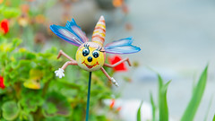 Novelty Garden Ornament (Stephen_Lavery) Tags: bug domesticgarden dragonfly face flowerbed flying funny geranium insect novelty ornament plastic pole prop reed stake support toy wings blue yellow green plant flower flora artificial floral outdoors cute backgrounds shallowdepthoffield landscape colourful multicoloured colour closeup bright garden summer spring springtime season knickknack bauble trifle gewgaw curiosity