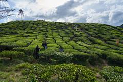 Bharat Tea Plantation (sydbad) Tags: cameron highland bharat tea plantation sony sonya7 ilce7mk2 fe 24105mm f4 g oss sel24105g outdoor sky green
