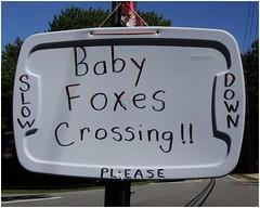 Baby Foxes Crossing   Homemade Sign   Red Oak Park neighborhood   Marietta, GA (steveartist) Tags: signs homemadesigns plasticstoragecontainer top lid sky trees road snapseed sonydscwx220 stevefrenkelphoto babyfoxescrossing slowdown