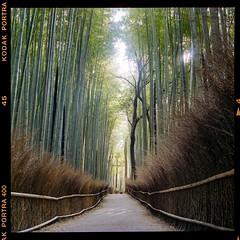 Arashiyama Bamboo Forest (instagram.com/dimush) Tags: portra400 rolleiflex 120mm kodak portrait analog 120мм 120film среднийформат epsonv700 rolleiflex28e 120 portra grainisgood girl tlr 6x6 пленка film mediumformat japan kyoto arashiyama