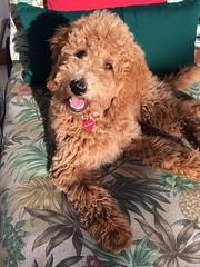 Maggie Mae sunbathing
