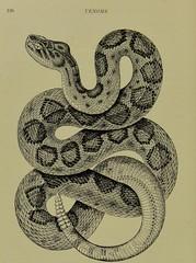 This image is taken from Page 126 of Venoms : venomous animals and antivenomous serum-therapeutics (Medical Heritage Library, Inc.) Tags: venoms snake antivenins leedsuniversitylibrary ukmhl medicalheritagelibrary europeanlibraries date1908 idb21503485