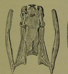 This image is taken from Page 139 of Venoms : venomous animals and antivenomous serum-therapeutics (Medical Heritage Library, Inc.) Tags: venoms snake antivenins leedsuniversitylibrary ukmhl medicalheritagelibrary europeanlibraries date1908 idb21503485