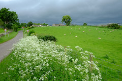 Great Musgrave Cumbria (Adam Swaine) Tags: cumbria broads broadsuk farming farms england english englishlandscapes englishvillages farm hedges hedgerows britain british beautiful uk ukcounties rural counties countryside 2019 landscape sheep