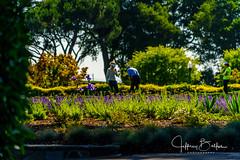 Peninsula Golf-942680 (Jeffrey Balfus (thx for 5,000,000 views)) Tags: a9 flowersplants sonyalpha summer landscape sanmateo california unitedstatesofamerica
