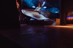 ozeaneum   l   whales   l   2019 (weddelbrooklyn) Tags: ozeaneum stralsund wasserwelt greenpeace waterworld underwater sharks water light shadows colors colorful nikon d5200 unterwasser wasser meer meere ozean ostsee wale haie licht schatten bunt farbig whales ocean balticsea hamburgerfotofreaks