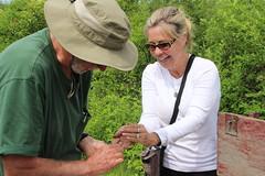 Nest box banding (Audubon Community Nature Center) Tags: terry birdbanding treeswallow nest lee ann