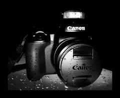 Not water-sealed ! Canon PowerShot SX70 HS DS Versatile  Bridgecamera. (eagle1effi) Tags: not watersealed wasserdicht canon powershot sx70 hs ds versatile bridgecamera review bewertung test