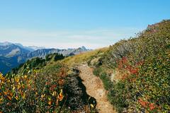 autumn_alps-3 (faeriedragon19) Tags: kleinwalsertal austria hiking mountain alpen alps baad adventure trekking nature mountaineering olympus omd em5 autumn woods