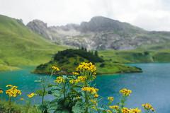 mountain_home-5 (faeriedragon19) Tags: allgäu alps alpen mountain mountaineering nature europe germany deutschland kleinwalsertal austria adventure hike hiking trekking olympus omd em5 landscape
