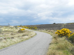 Road to Dunlichity, May 2019 (allanmaciver) Tags: gorse bloom road dunlichity narrow b less travelled clouds curve scotland highlands allanmaciver